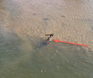 If you need a break, doggy paddle