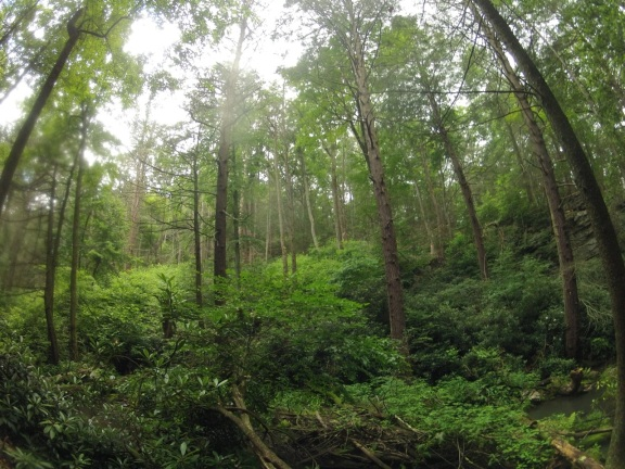 Lush forest along the run course