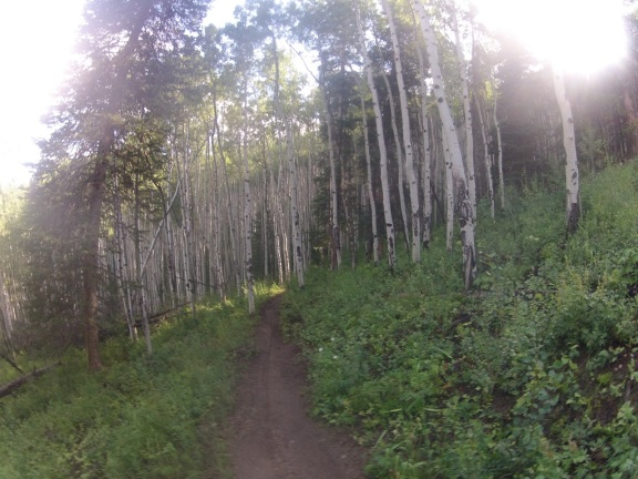 aspen forest with singletrack bike path