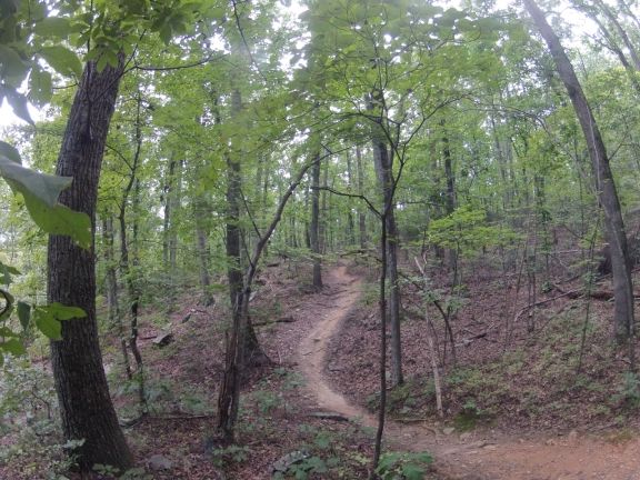 Steep, winding singletrack in summertime forest, trail contains several rocks and roots