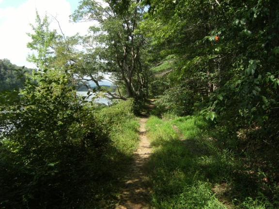Narrow dirt singletrack surrounded by grass and thick foliage, with Lake Laura visibile on the left