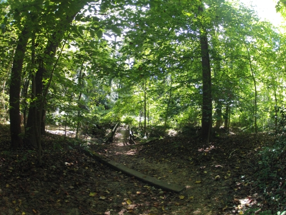 Shaded downhill trail, with a wooden bride crossing a creek, green leaves shine in the sunlight