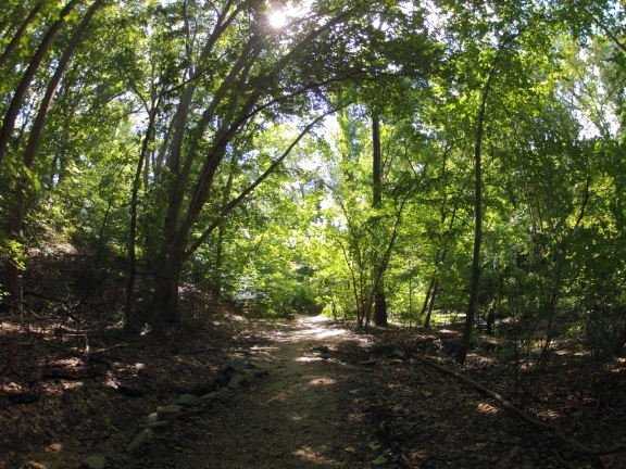 Wide, shaded dirt trail, with the bright green leaves on the trees overhead almost glowing in the sun