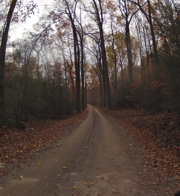 Hardpack dirt and gravel road with fallen leaves from 50 ft trees covering both sides of the road and the forest floor