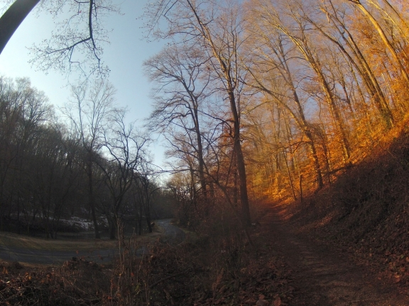 A view of Beach Driving running parralle to Rock Creek, with a trail running along the ridge above the road.  The trees are brightly lit by the rising sun