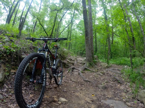My full-suspension 29er mountain bike in the foreground, with set, rock and root covered trails in the background and a lush green forest cover overhead