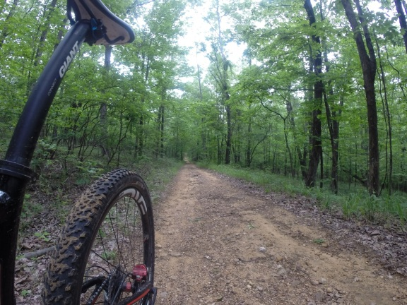 The rear tire of my Giant Anthem x 29 mountain bike and a view of a long, flat fireroad in the middle of a luch green forest