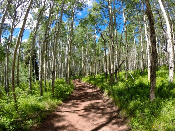 A dirt road with green wild grass on either side and shade from a large aspen grove