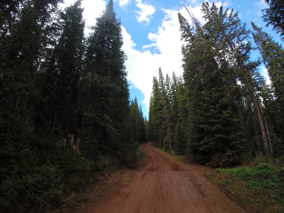 Wet dirt road with stately pines lining either side
