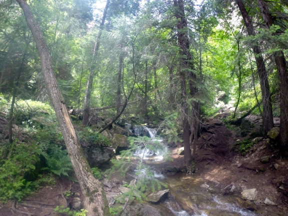 Mountain stream flowing down a rocky stream bed, flanked by 30ft tall pines dripped in sunlight