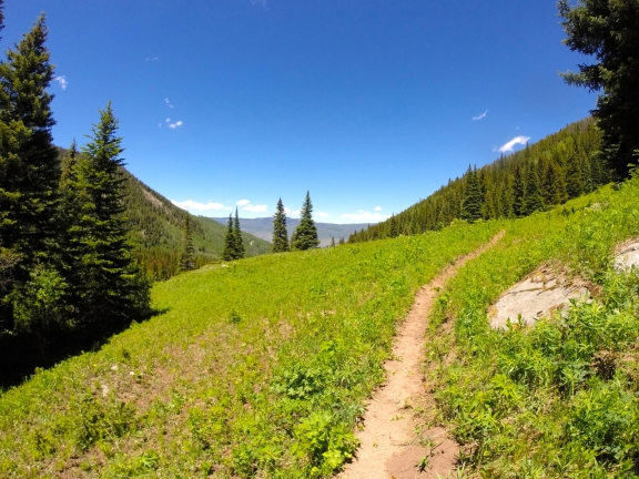 Narrow dirt singletrack on a grassy mountain meadow with pine covered ridges careening down to the left adn right, Red and White Mtn on the horizon under a perfect blue sky