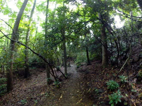 You almost feel transported to a rainforest while riding on portions of the lower slopes