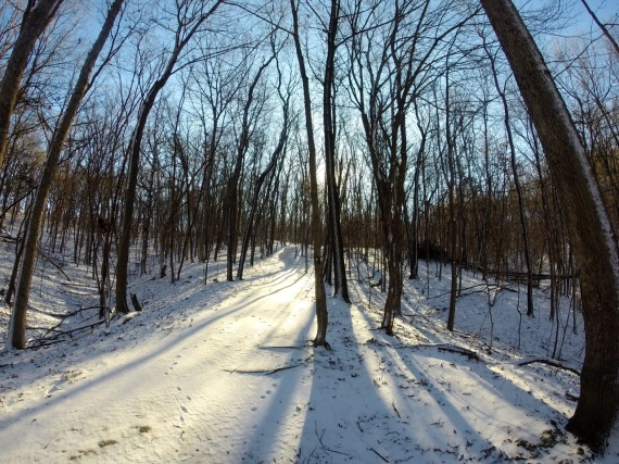 Snowcovered trail in Squire Point. Winter trees no leaves.