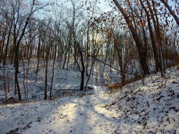 Shadowy forest.