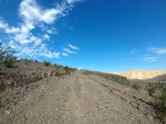 Gravely desert trail with small scrubby green bushes to the side.