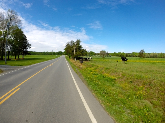 Country road, green field, cows, blue sky.