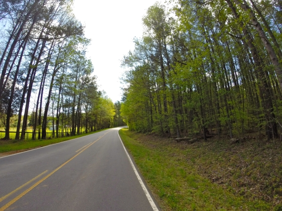 Solitary two-lane country road, no traffic. Slender pine trees stretching up to the sky.