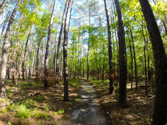 Wooded trail at Goose Creek State Park; Tall pines and hardwoods.