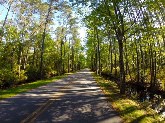Goose Creek State Park entrance road. Paved road flanked with water and forest on both sides. Light blue sky poking through dense green leafy tree cover.