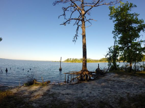 View of Pamlico Sound, with sandy beach in the foreground. Dead pine tree standing on a wide cylinder of roots exposed by eroded sand.