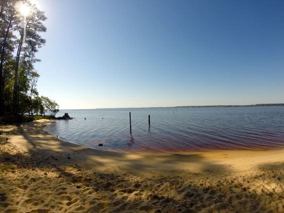 Serene view of still water in the Pamlico Sound with sandy beach in the foreground. Small stand of hardwood trees visible at the left edge of view. Two small short remnant tree trunks sticking out of shallow water.
