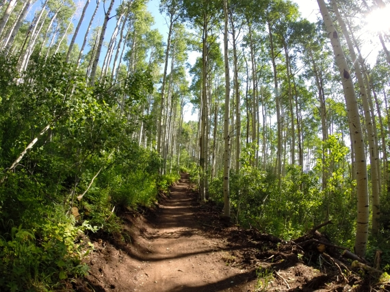 Dark earth trail through lush Park City forest