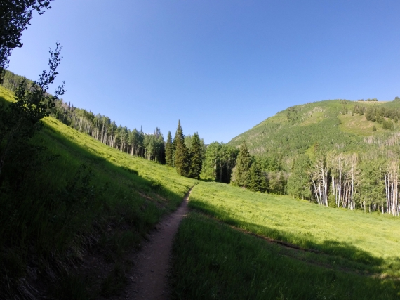 IMBA Epic Mid Mountain trail cutting through open green grass, headed for a stand of trees in the background