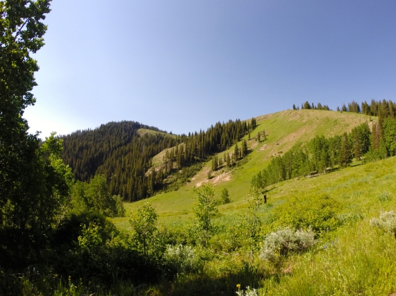View of a Park City mountain hillside with intermittent light green meadows and stands of dark evergreens
