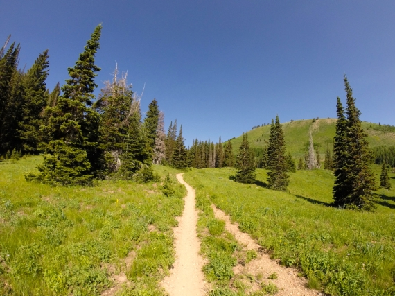 Dusty brown trail stretching through meadow dotted with tall, elongated conical evergreens